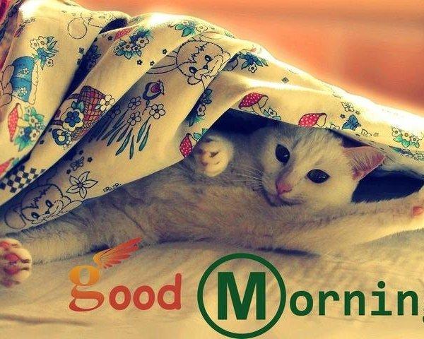 Картинка доброе утро хорошего дня на английском