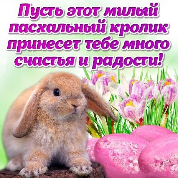Пасхальный кролик картинки