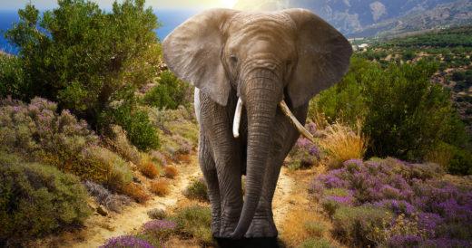 загадка про слона для детей 7 лет