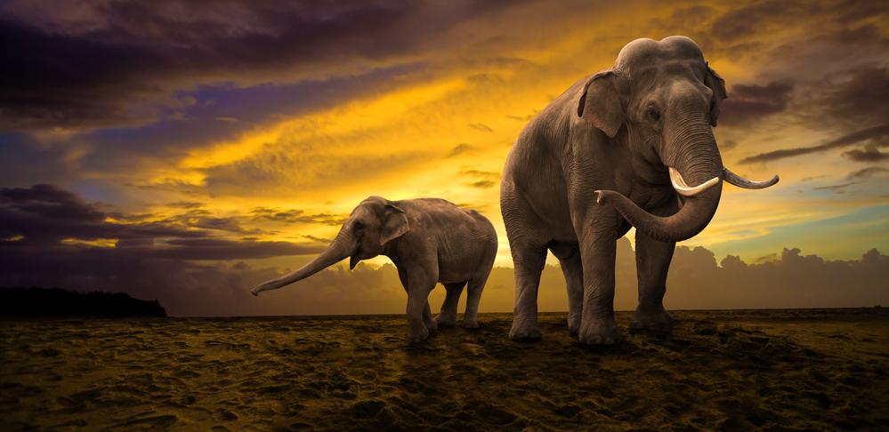 загадки про слона для детей с ответами