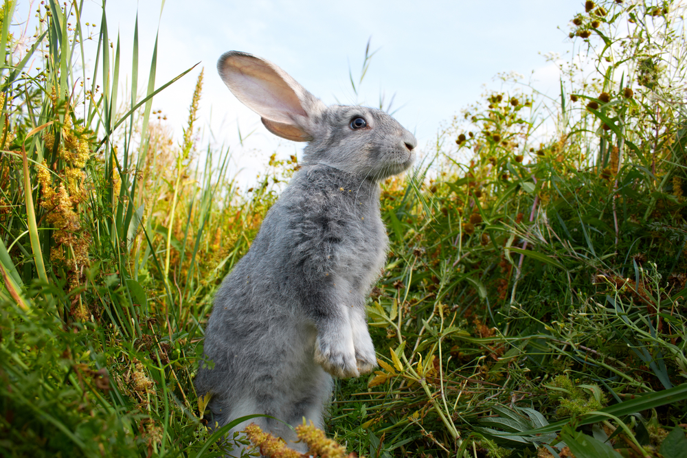 заяц в природе