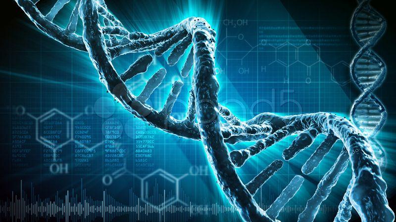 Строение ДНК человека