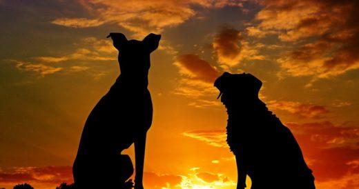 Две собаки на фоне неба