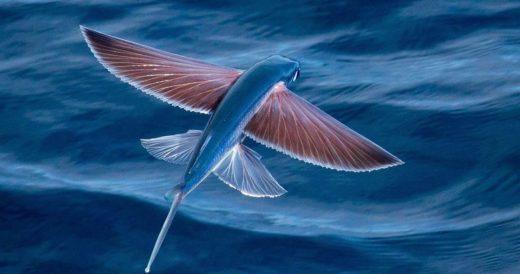 Морской вид двукрыловых