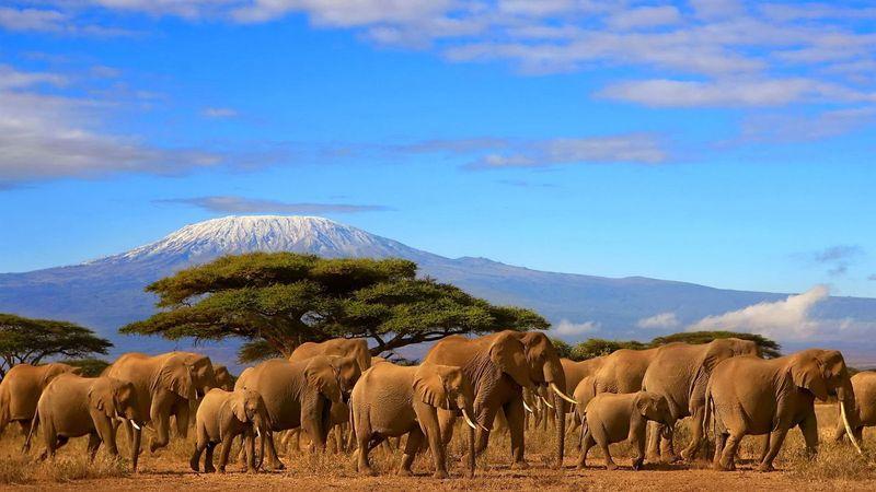 Танзания, Сафари