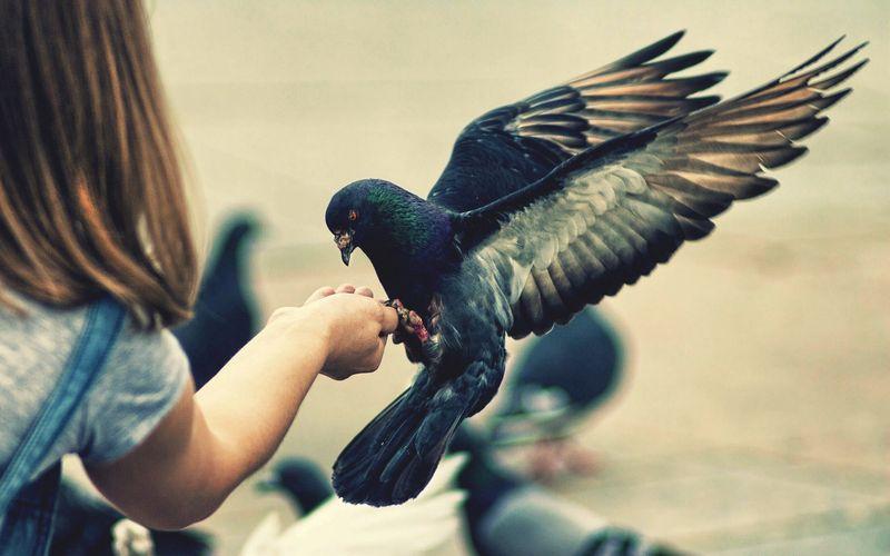 Дети и птицы