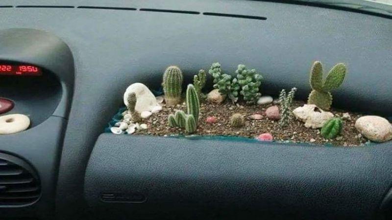 Клумба в авто