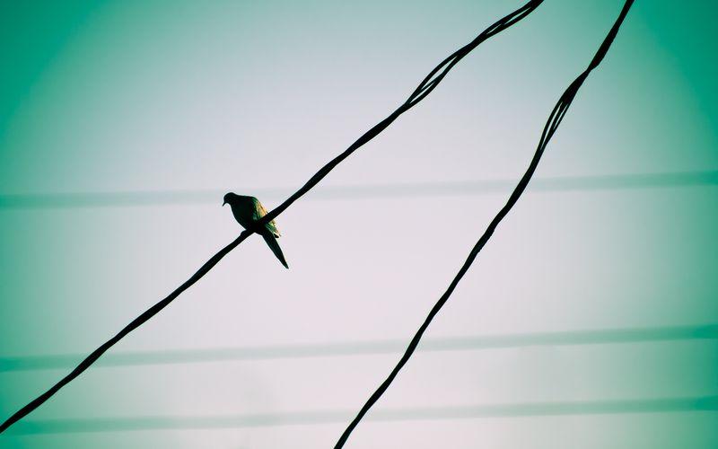 Почему птицы не погибают, сидя на проводах