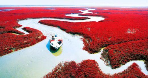 Красный пляж Паньцзин