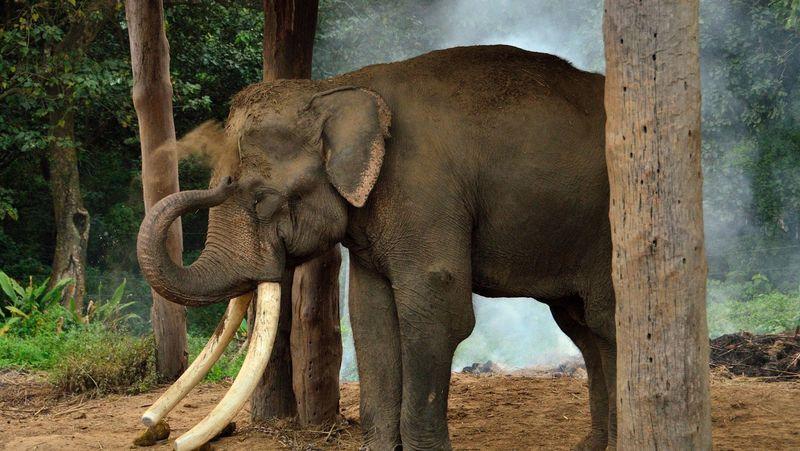 Спящий слон