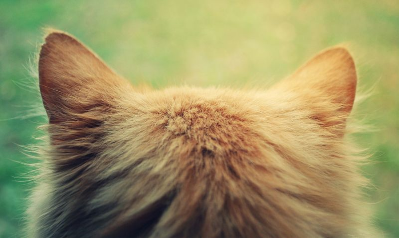 Кошачьи уши