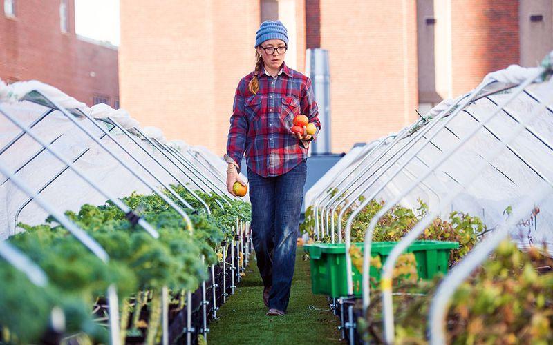 Внутригородское сельское хозяйство