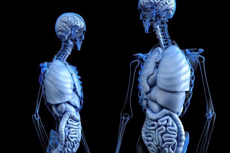 Реконструкция органов в 3-D
