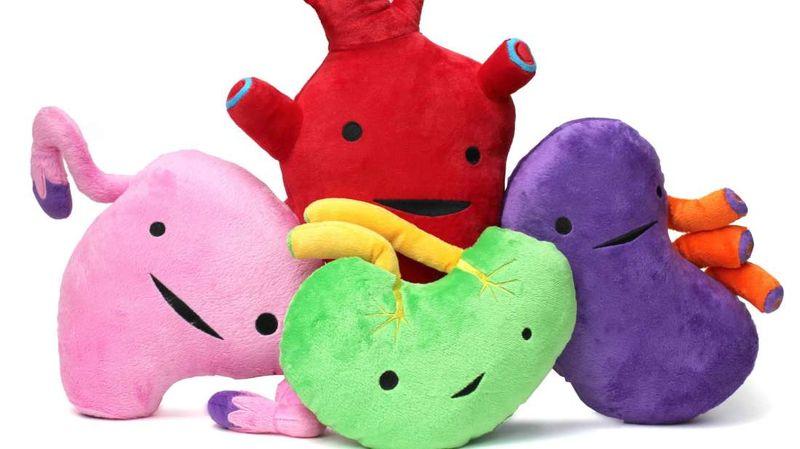Игрушки-органы I Heart Guts