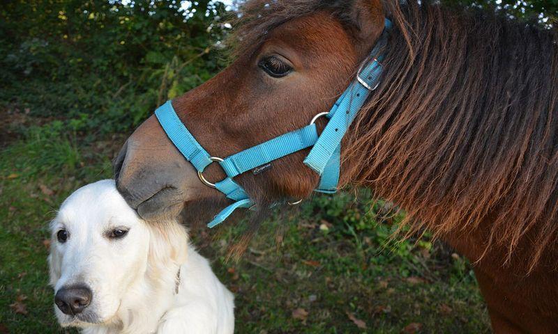 Лошадь общается с собакой