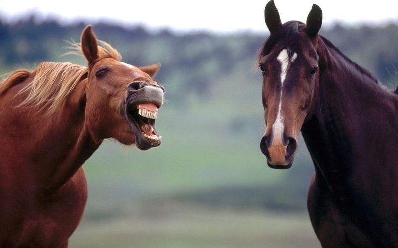 Как смеется лошадь