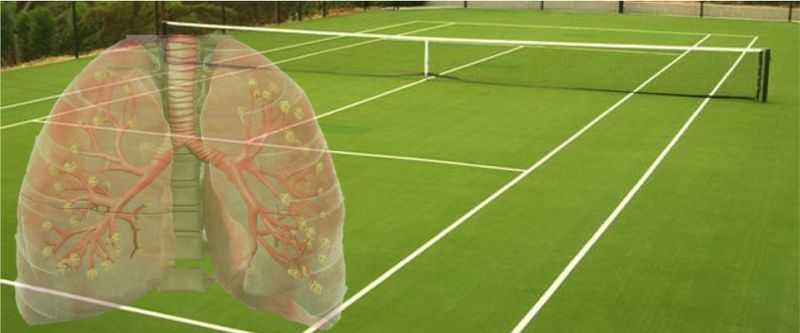Площадь легких равнозначна теннисному корту