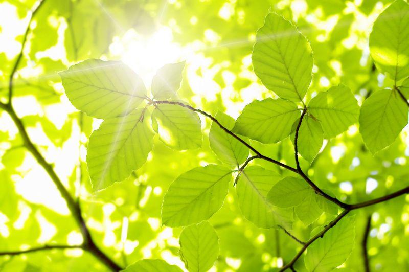Удивительные листья