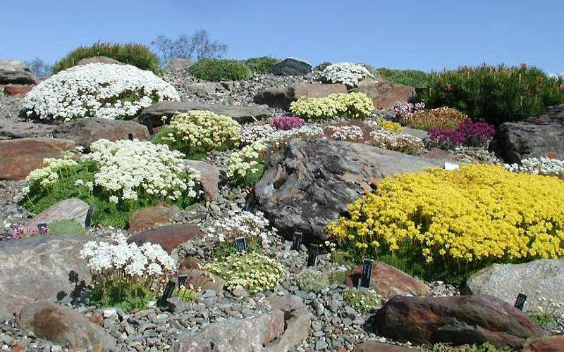 Арктический ботанический сад, Норвегия
