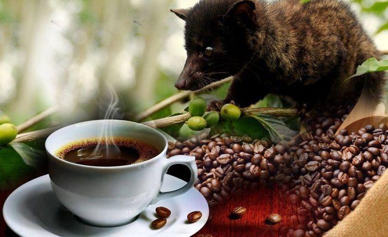 Кофе Копи Лювак