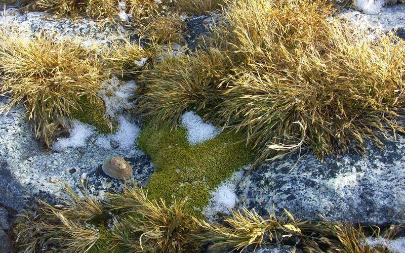 Растительный мир Антарктиды