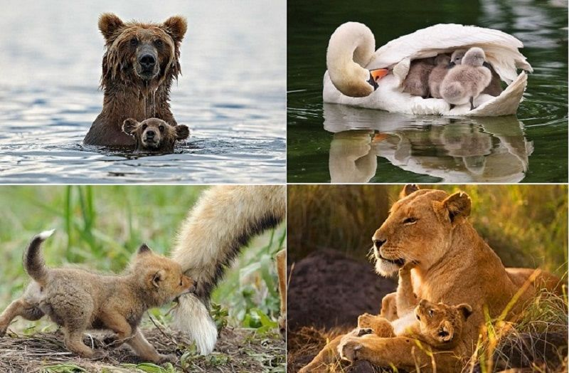 Животные: продолжение рода