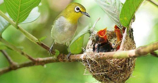 Удивительные гнезда