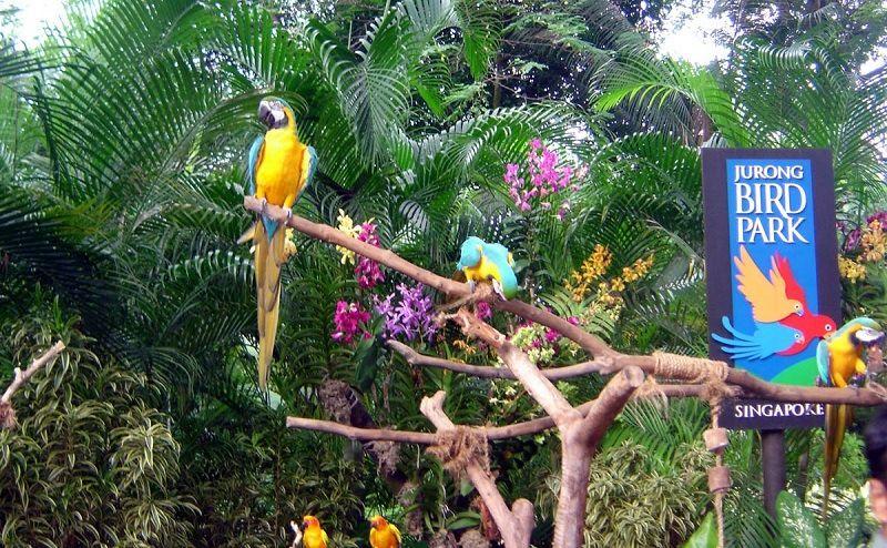 Парк птиц в Сигнапуре