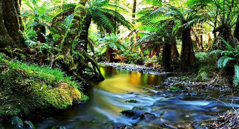Влажные тропики Квинсленда