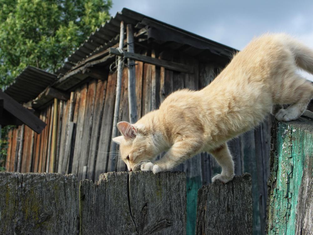 кот гуляет сам по себе