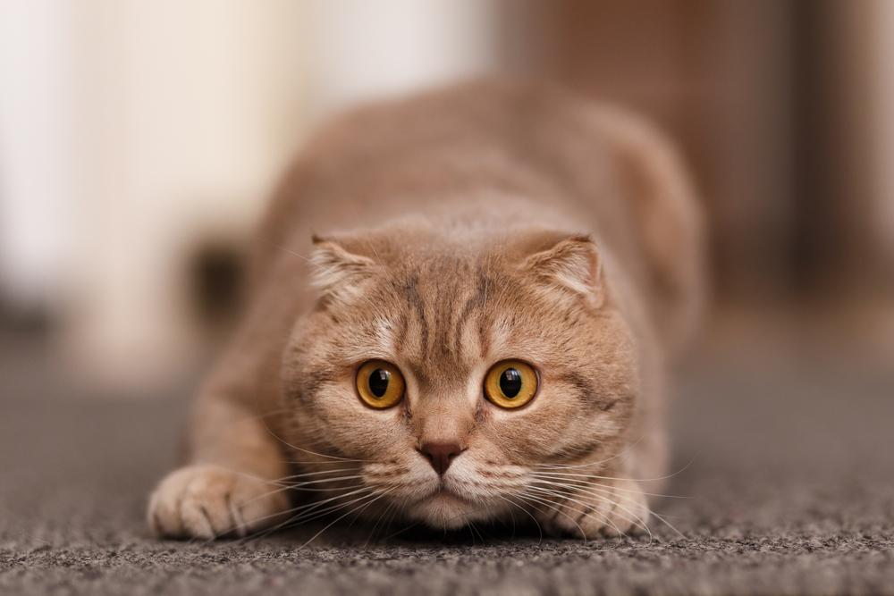 кот крадется