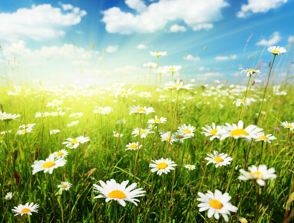 луг с цветами