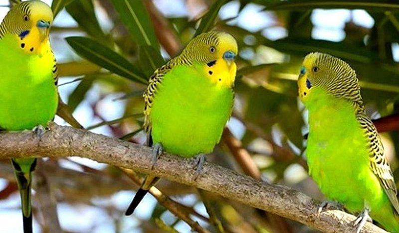 Удивительные факты о попугаях