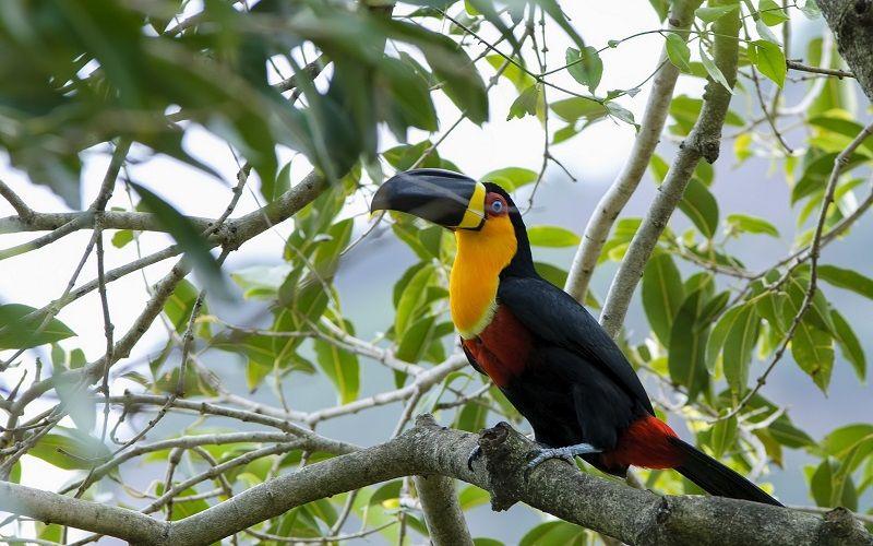 Продолжительность жизни попугаев