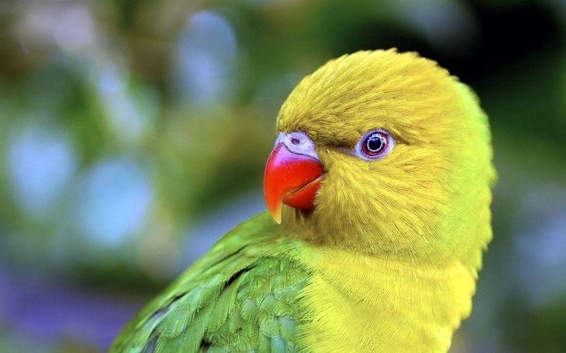 Зрение попугаев