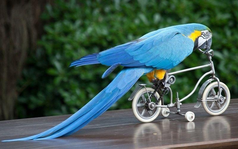 Клюв попугая как «третья» нога