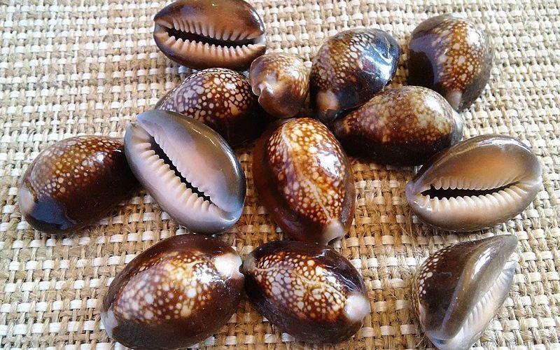 Раковины Каури как средства расчета в племенах Океании