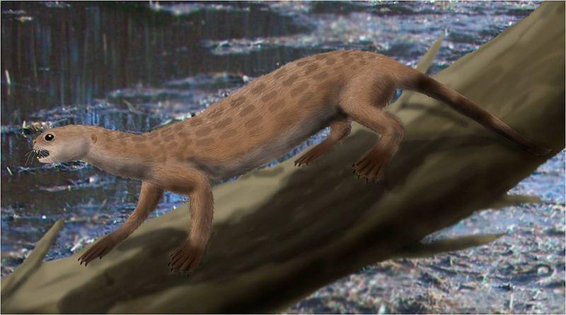 Пуйила – житель доледникового периода