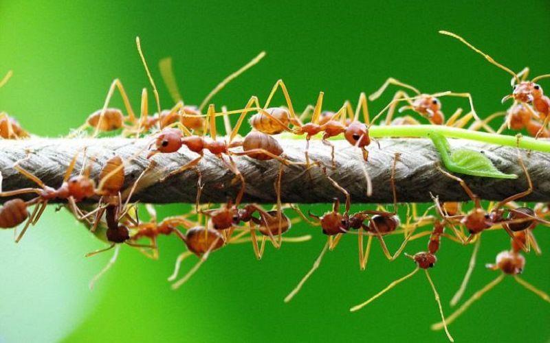 Семейство муравьев