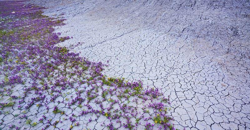 Цветущая пустыня (Юта)