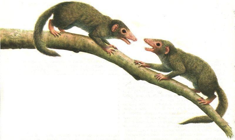 Насекомоядные предки современных млекопитающих