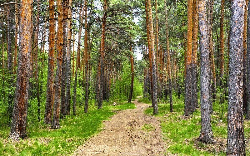 Городской сосновый бор Челябинска