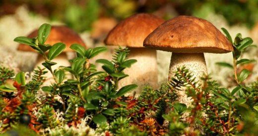 Удивительные факты о грибах