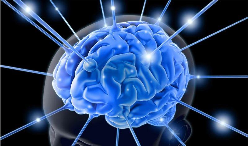 Удивительное о мозге