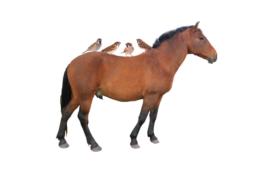 лошадь и воробьи