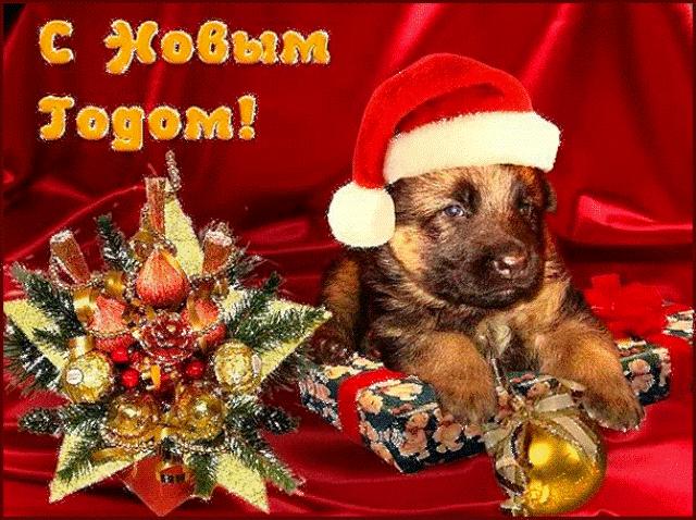 картинка с новым годом собаки