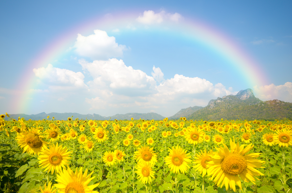 красивая природа вместе с радугой