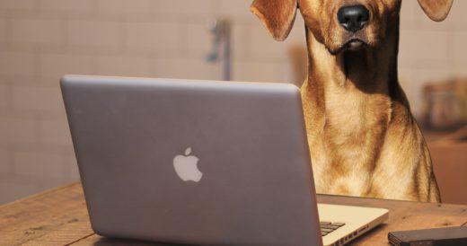 собака смотрит статус для группы в ноутбуке