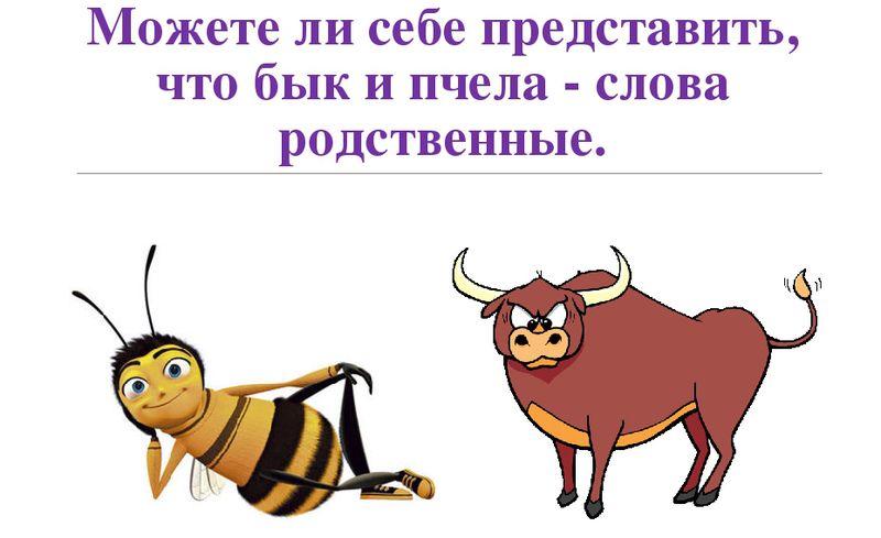 Бъчела - бык и пчела однокоренные слова