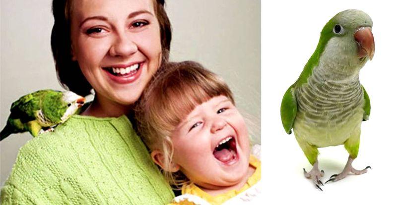 Попугай Вилли спас ребенка